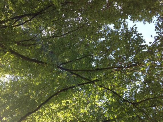 bomen kijken